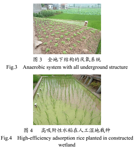 ACGMP生态农村污水处理系统应用